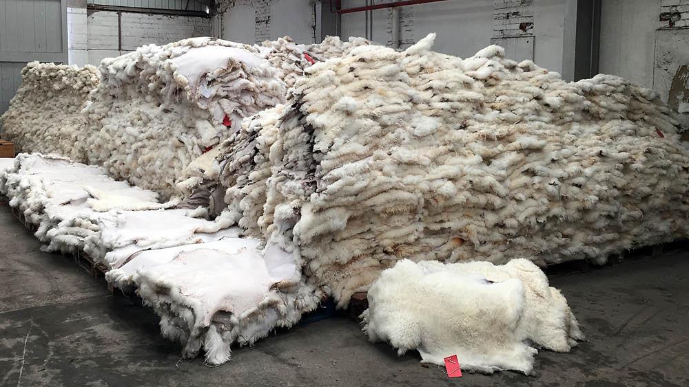 Turkish Sheepskin Tannery